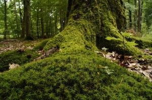 forest-866739_960_720