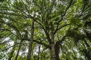 bamboo-1224038_960_720