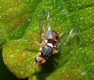 Fly_December_2007-11