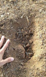 peritaje daños agrícolas